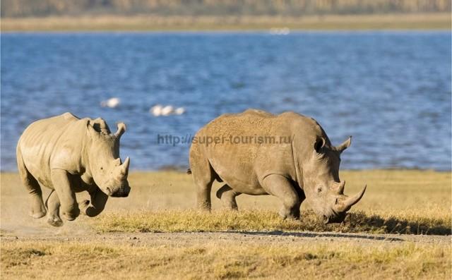 Зимбабве туры за рубеж