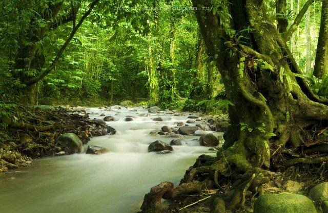 Река в штате Селангор отдых в Малайзии