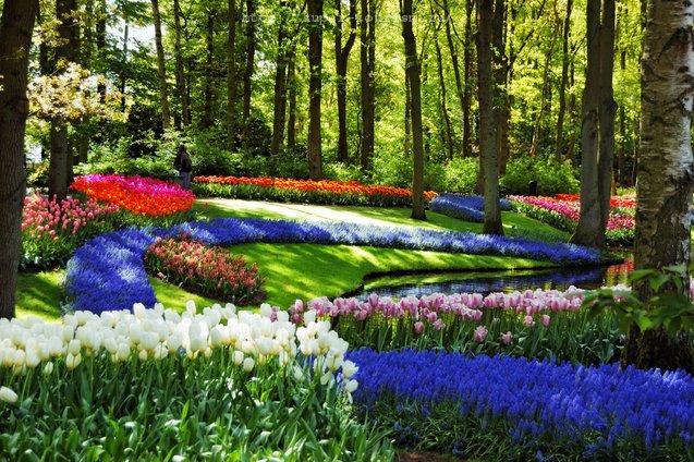 Нидерланды отдых за границей Кекенхоф