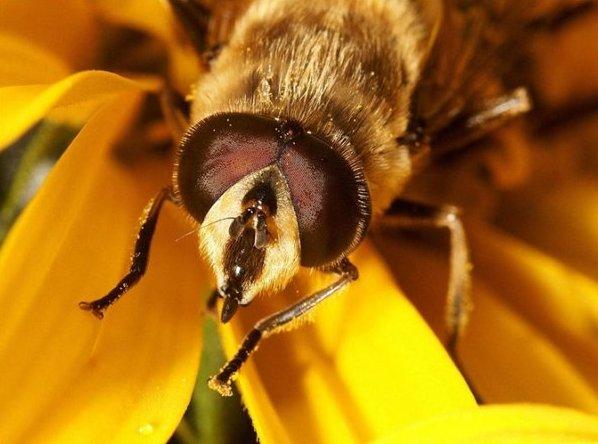 Безопасность за границей насекомые