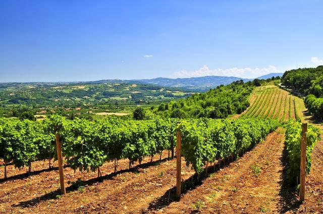 Виноградники отдых в Сербии