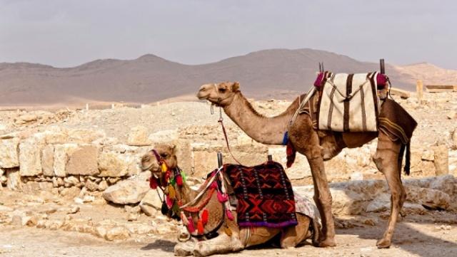 Путешествие и отдых в Сирии