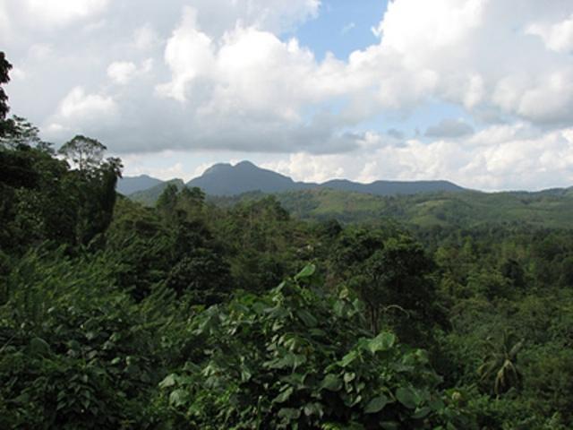 лес Синхараджа
