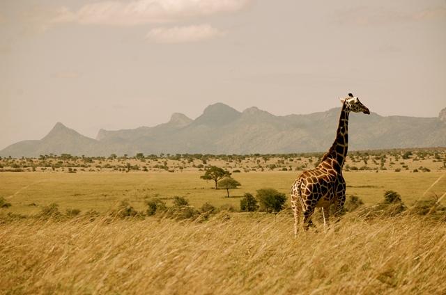 Уганда лучшие природные парки