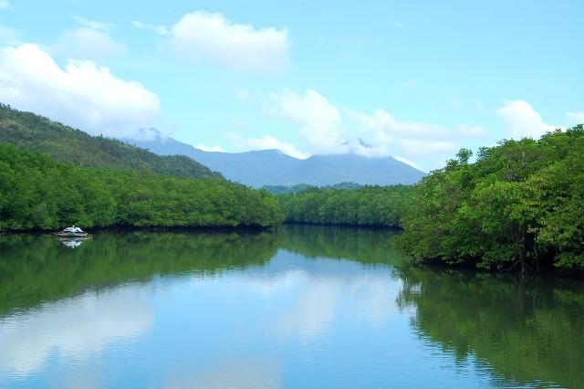Филиппины Мангровые леса